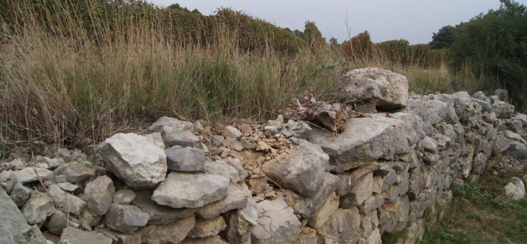 Chemin de Corconne - Parcelle La Croix - Domaine de l'Hortus - Pic Saint Loup - Octobre 2013