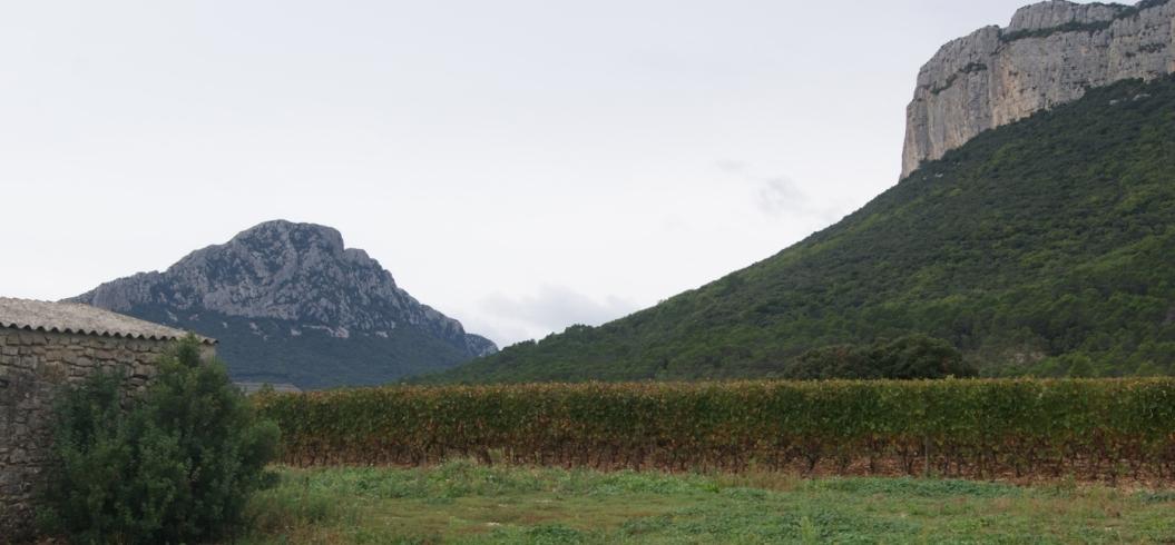 Le Mazet - Domaine de l'Hortus - Pic Saint Loup - Octobre 2013
