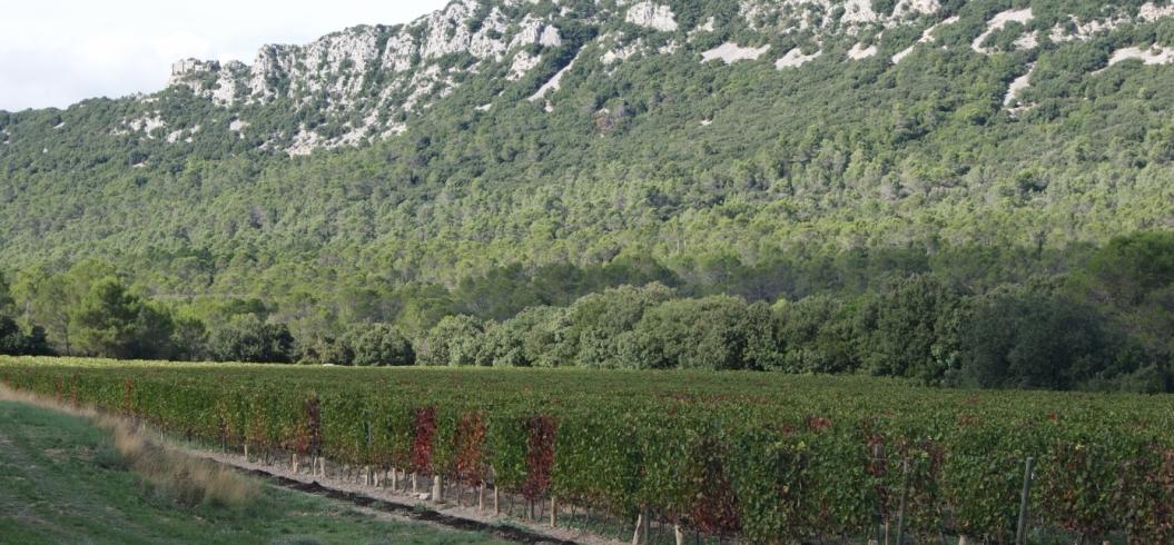 Parcelle Bosquet - Domaine de l'Hortus - Pic Saint Loup