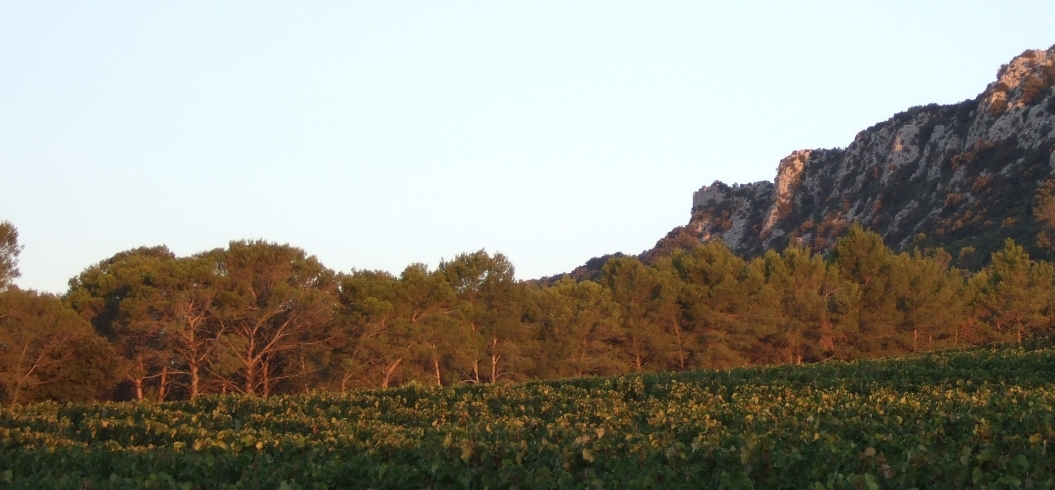 Parcelle Grand Pin - Domaine de l'Hortus - Pic Saint Loup