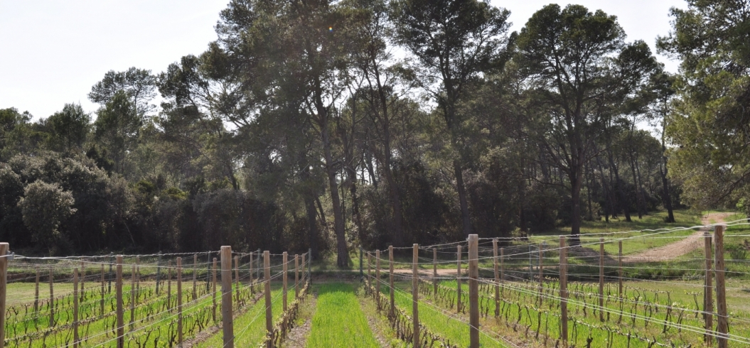Parcelle La Vigne de Charles - Domaine de l'Hortus - Pic Saint Loup