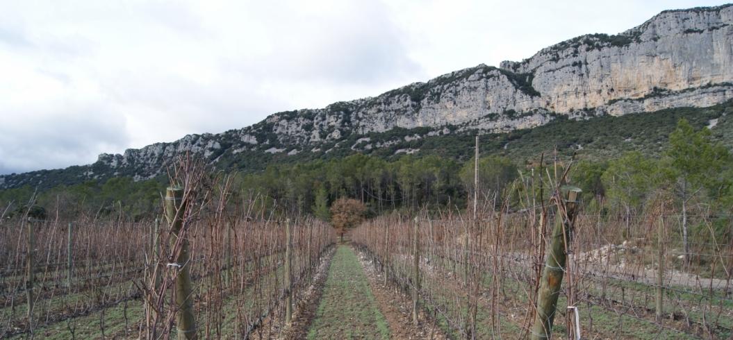 Parcelle Lallemand - Domaine de l'Hortus - Pic Saint Loup