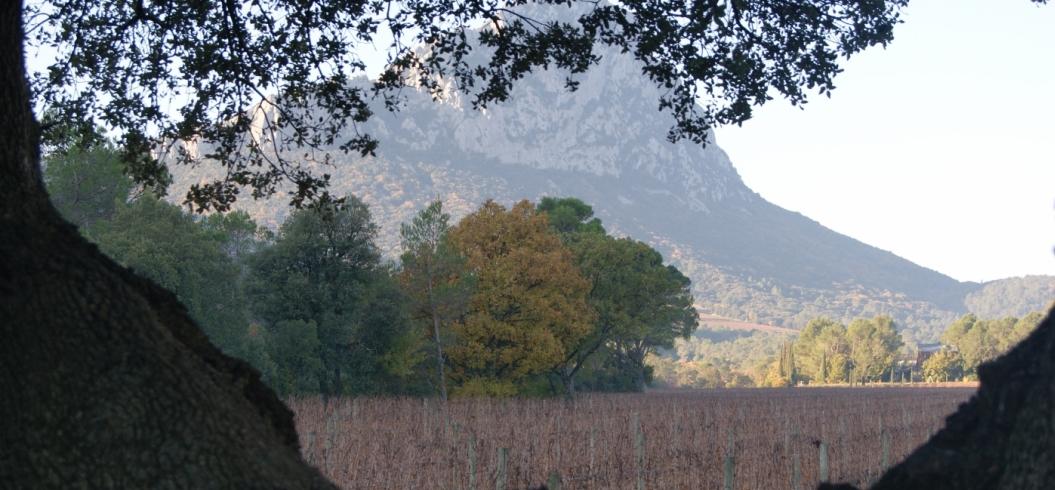 Parcelle Les Muriers - Pic Saint Loup - Décembre 2013