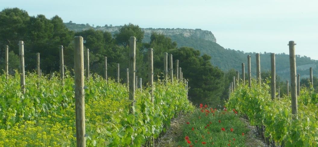 Parcelle Mazet Haut - Domaine de l'Hortus - Pic Saint Loup