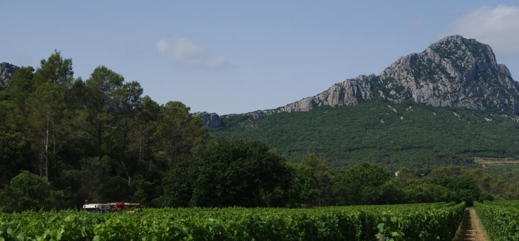 Parcelle Migranière - Domaine de l'Hortus - Pic Saint Loup