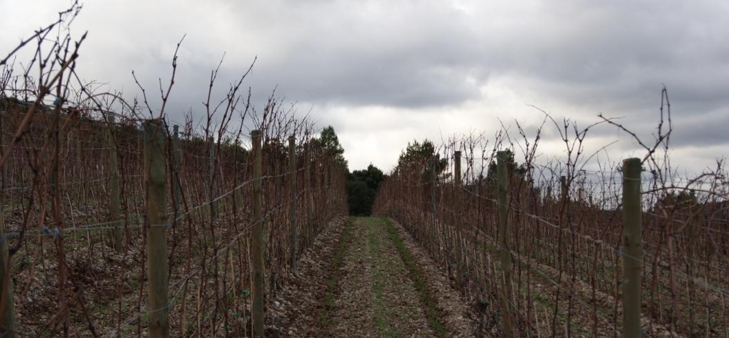 Parcelle Vigne Haut - Domaine de l'Hortus - Pic Saint Loup